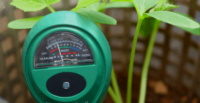 Acid-loving Houseplants: Soil Meter