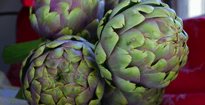 Artichoke Plant Edible Part