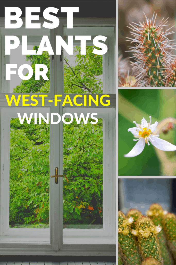 Best Plants For West-Facing Windows