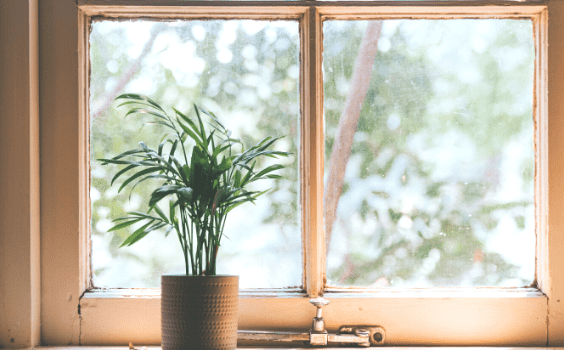 Best Plants for West-Facing Windows Featured Image
