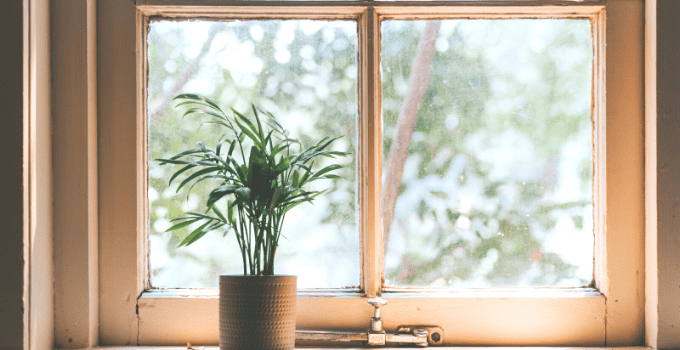 The 14 Best Plants for West-Facing Windows