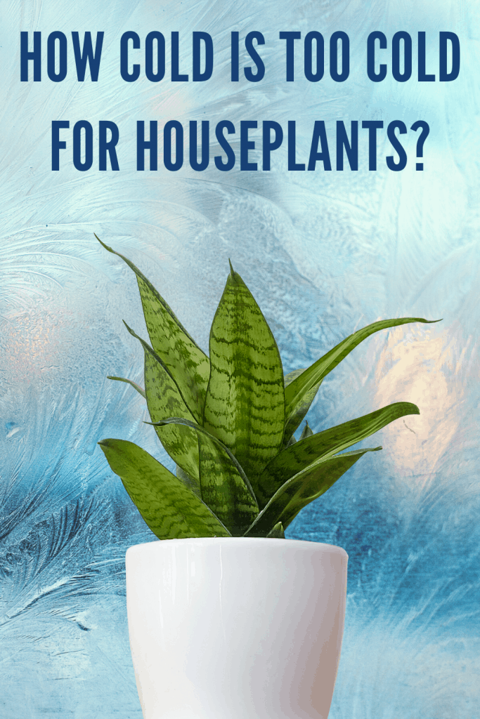 How cold is too cold for houseplants?