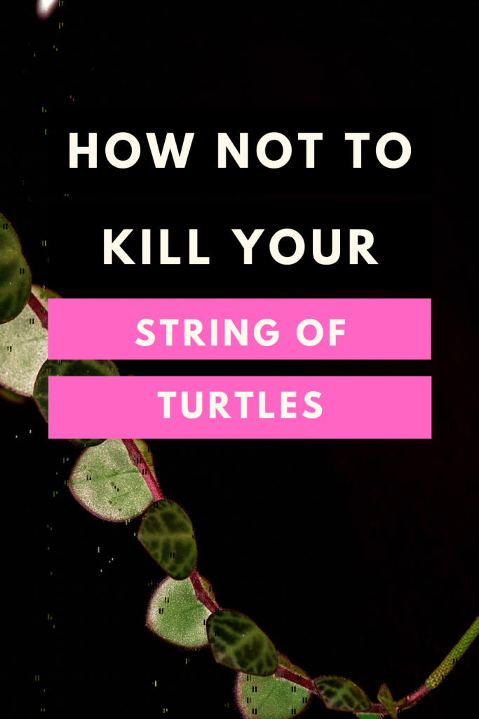 How not to kill your String of Turtles