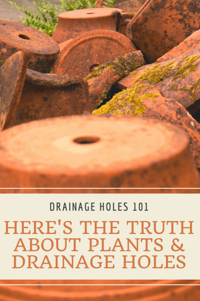 Plants and Drainage Holes