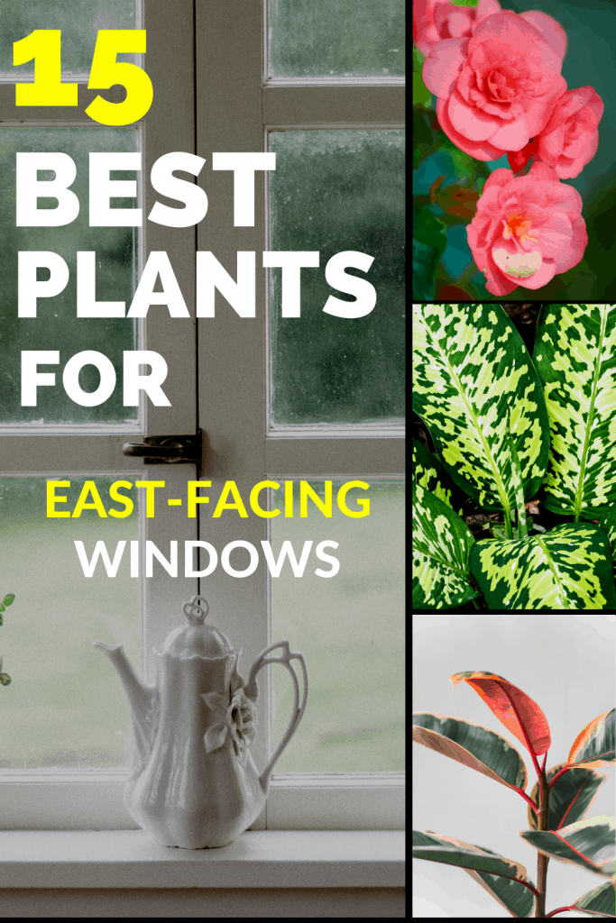 15 Best Plants for East-Facing Windows