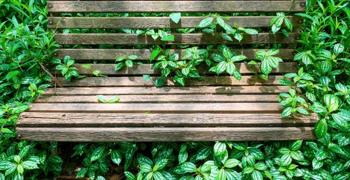 East-Facing Window Plant Favorites Pilea Cadierei
