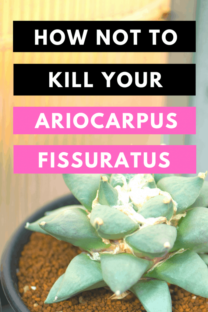 How Not To Kill Your Ariocarpus Fissuratus