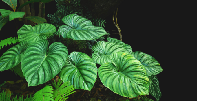 Philodendron Plowmanii #1 Best Care Hacks!