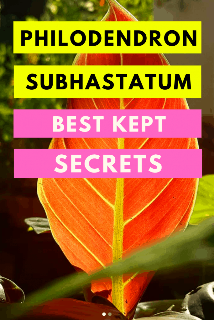 Philodendron Subhastatum Care Tips That Work Wonders 1