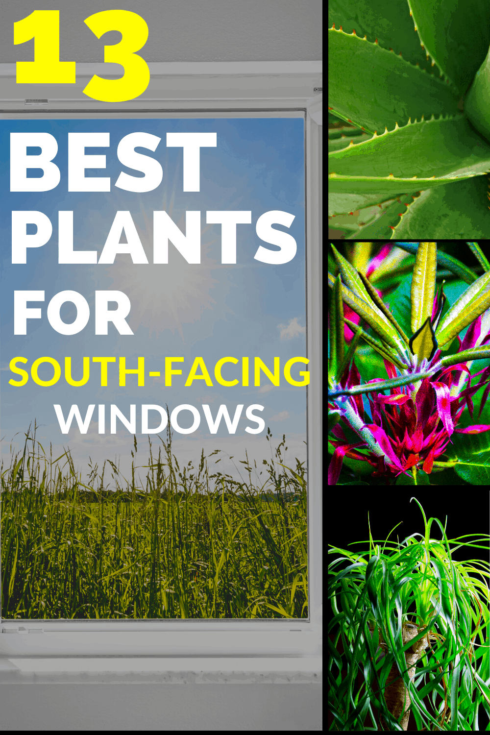 13 Best Plants for South-Facing Windows
