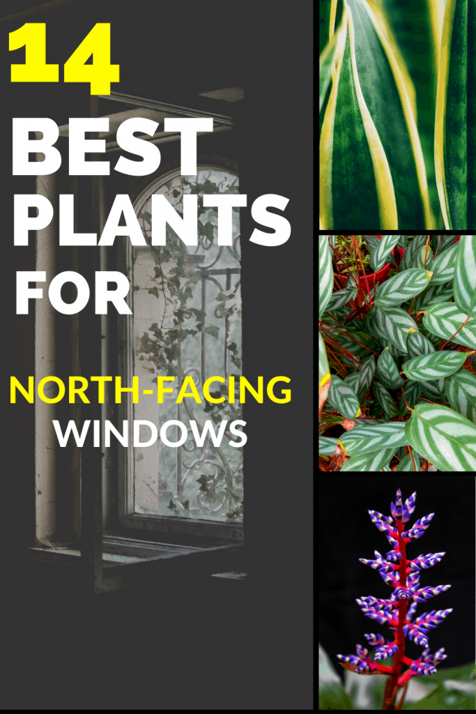 14 Best Plants for North-Facing Windows