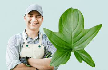 Philodendron panduriforme plant care