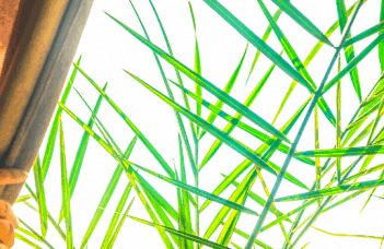 South-Facing Window Plants