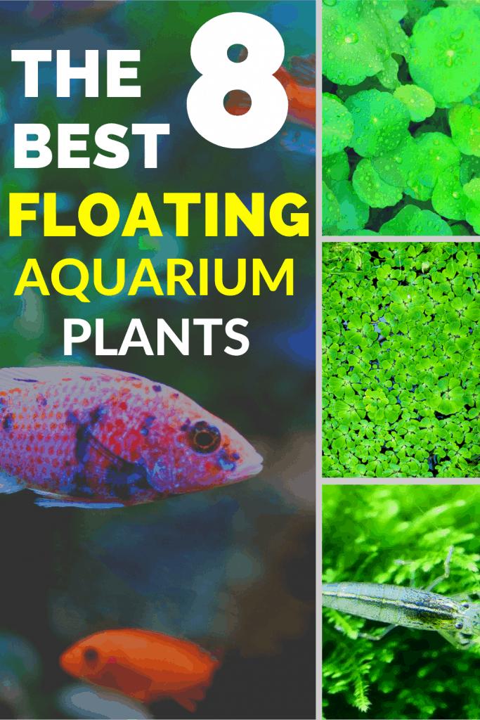 The 8 Best Floating Aquarium Plants