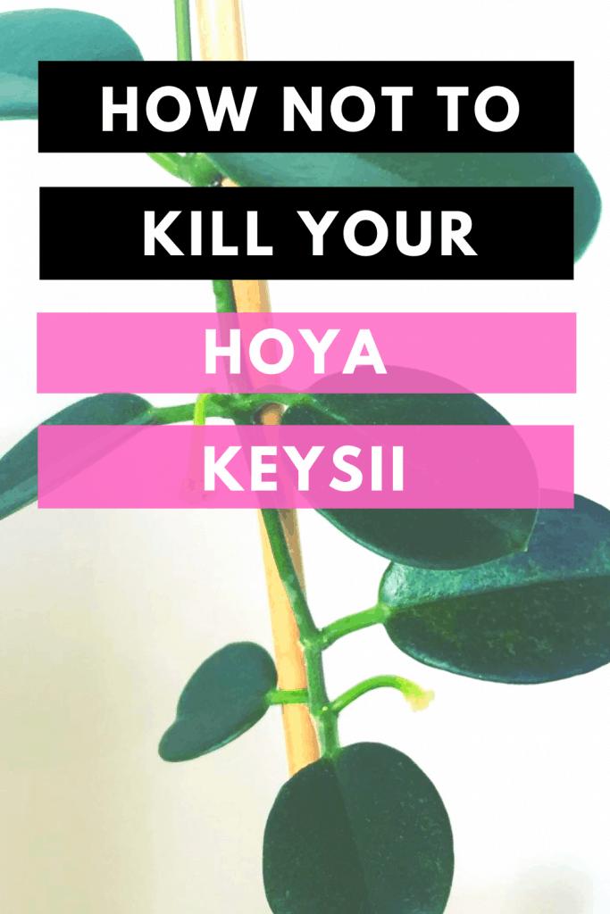 How Not To Kill Your Hoya Keysii