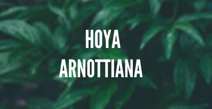 Hoya Arnottiana Care