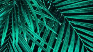 Black Spots on Palm Tree Leaves