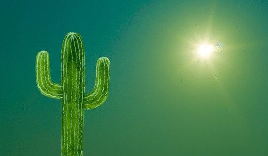 Do Houseplants Need Direct Sunlight