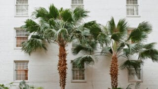 Facts about Palm Leaves