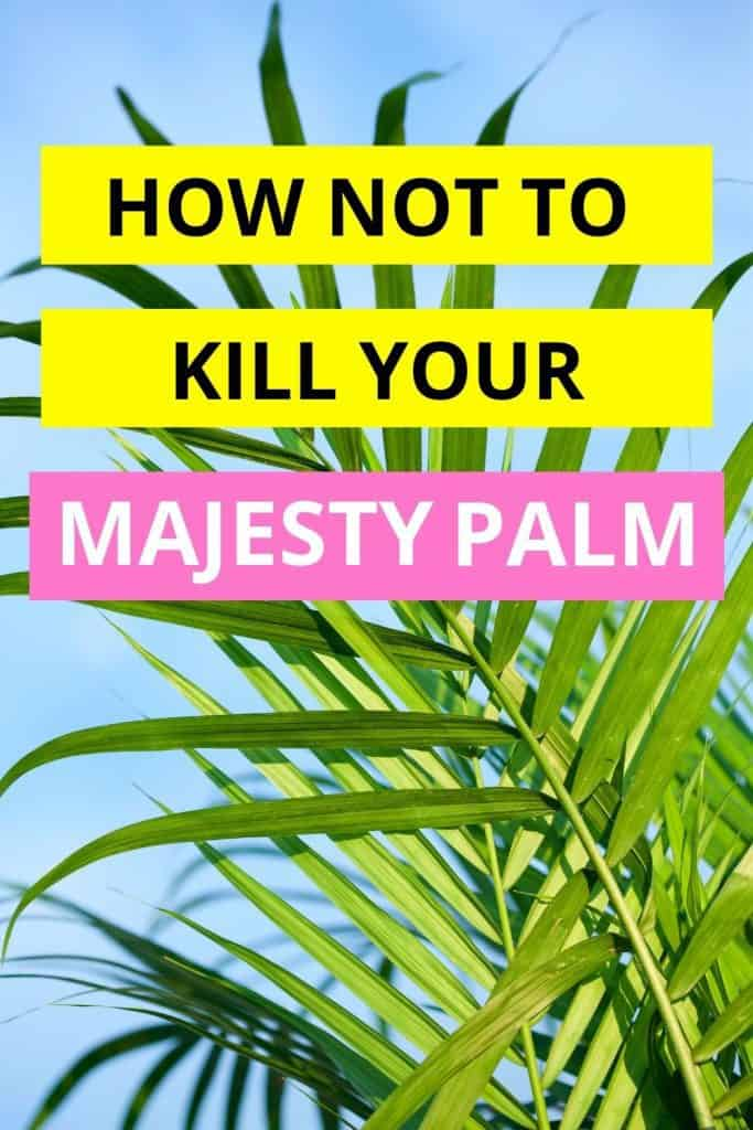 How Not To Kill Your Majesty Palm