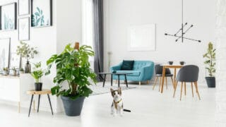 How to Keep Cats Out of Your Monstera Deliciosa
