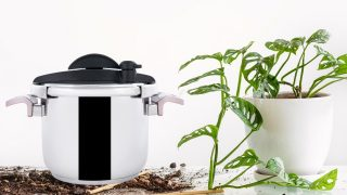 How to Sterilize Soil for Houseplants