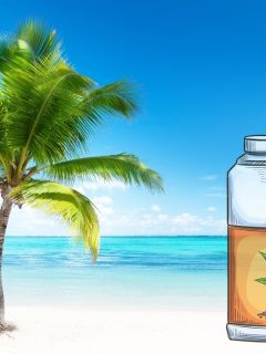 The Best Fertilizers for Palm Trees Updated