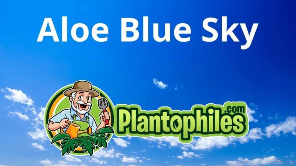 Aloe Blue Sky