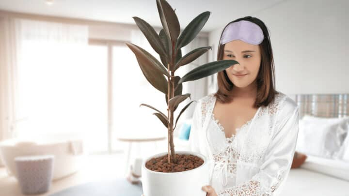 20 Best Houseplants for Air Purification
