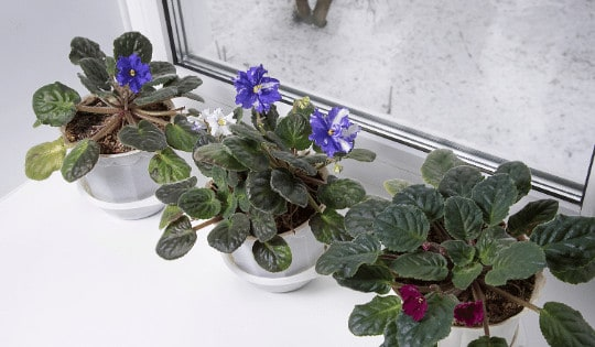 Do Houseplants Die in Winter