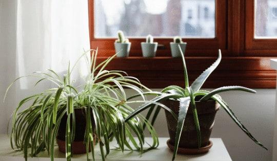 Do Houseplants Grow In The Winter