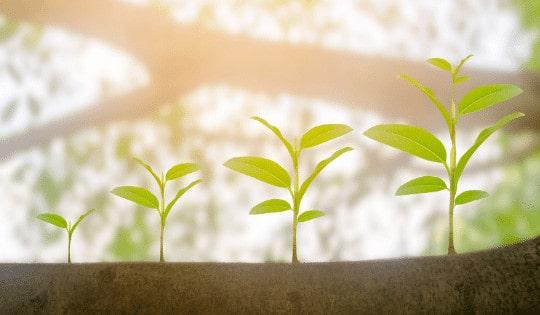 How Plants Grow