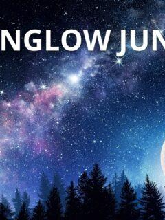 MOONGLOW JUNIPER Care