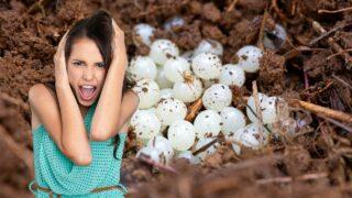 White Eggs in Soil