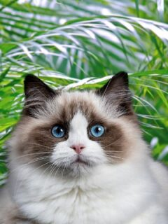 Are Palms Toxic To Cats