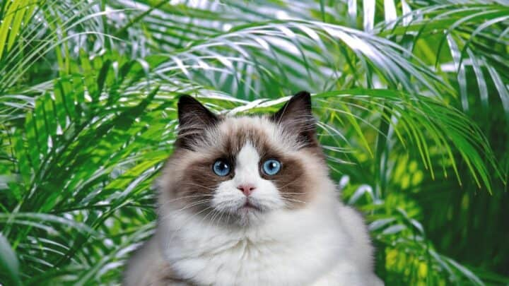 Are Palms Toxic to Cats? Well, Here's the Answer!