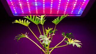 Best Houseplants for Growing under Artificial Lights
