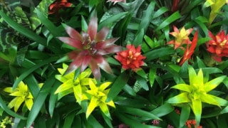 Best Potting Mix for Bromeliadsto Get Grease Stains Out of a Shirt