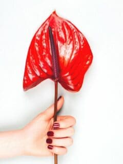 Common Problems with Anthurium