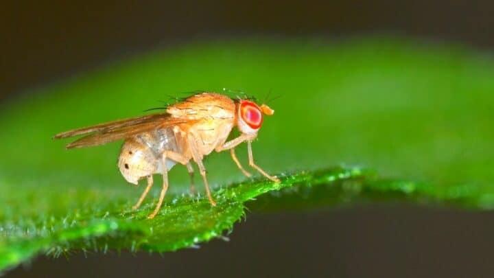 How to Get Rid of Fruit Flies in Plants  — 4 Proven Ways!
