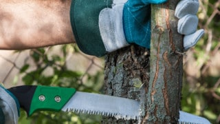 How to Prune Trees to Produce More Fruits