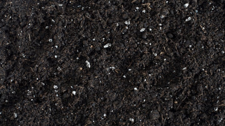 How to Reuse Potting Mix – Best Tips!