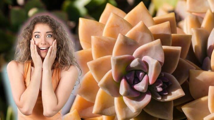 The 9 Prettiest Orange Succulents (Nr. 3 is Otherworldly!)