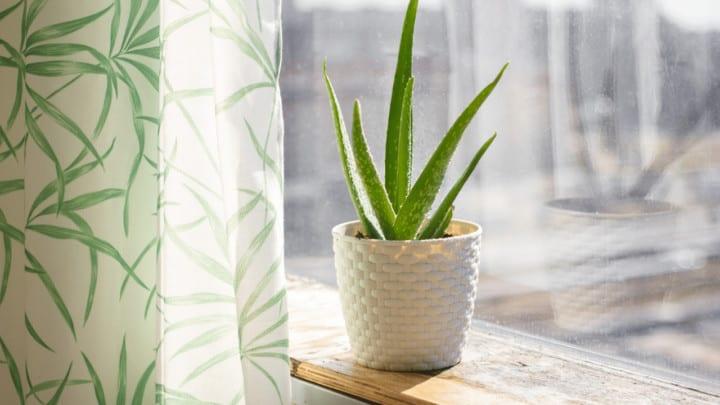 The Best Pot for Aloe Plants – Makes Sense!