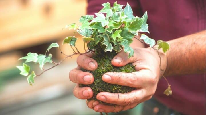 The 13 Very Best Plants for Kokedama — Revealed!
