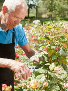 When and How to Prune Roses