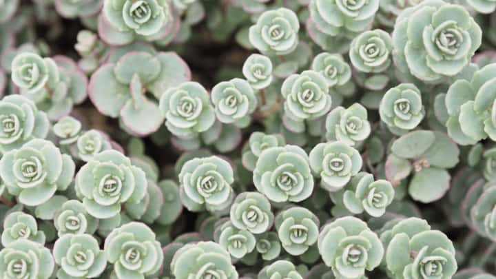 White Spots on Succulents – The Reasons