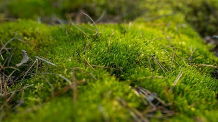 Peat Moss for Vegetable Gardens — Advantages & Disadvantages