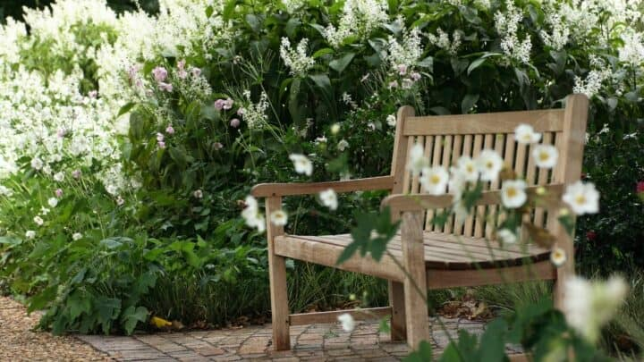 14 Best Plants for North Facing Gardens – Shade is Great!
