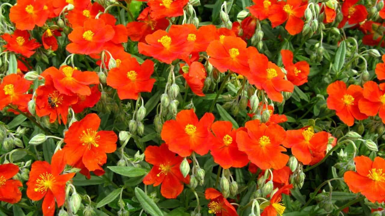 14 Best Plants for South Facing Gardens — Nr. 7 Is My Fav! 9